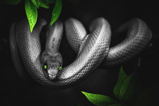 Snake Islamic Dream Interpretation Ibn Sirin Snake Dreams Meaning